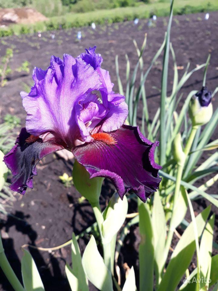 Цветы из собственного сада купить на Зозу.ру - фотография № 3