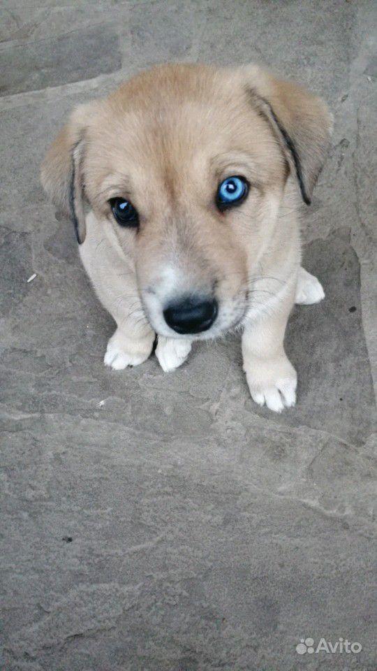 Отдам щенечка в хорошие руки в Туле - фотография № 2
