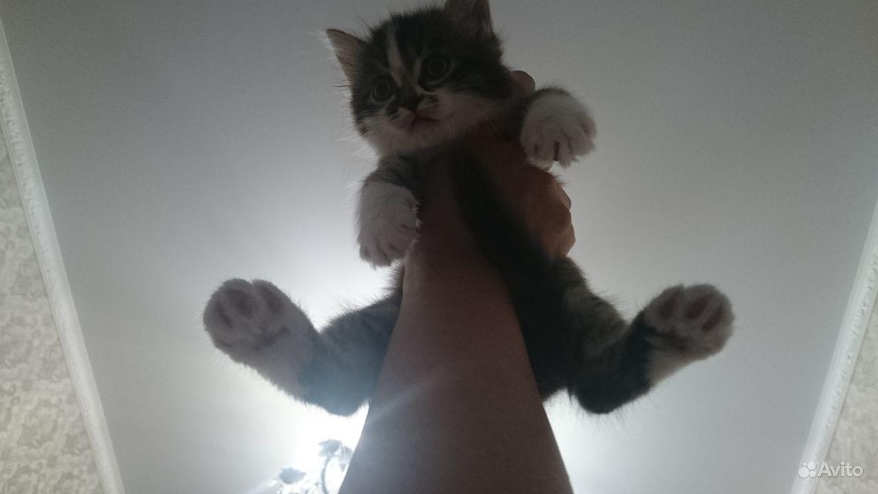 Крошка-кот