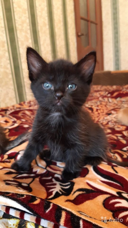 Котята-найдёныши ищут дом