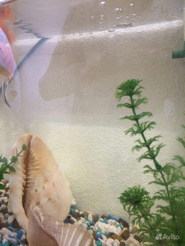 Аквариум с рыбками 30 литров купить на Зозу.ру - фотография № 4