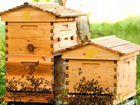 Пчелосемьи и оборудование для пчел