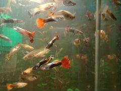 Рыбки и улитки