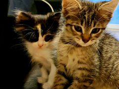 Кошечки под стерилизацию