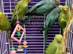Средние и большие попугаи