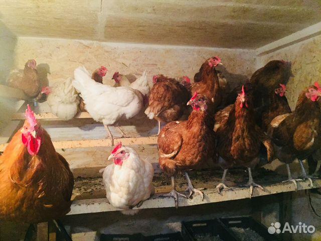 тоже необычный курицы новосибирска официальный сайт фото ними нужно