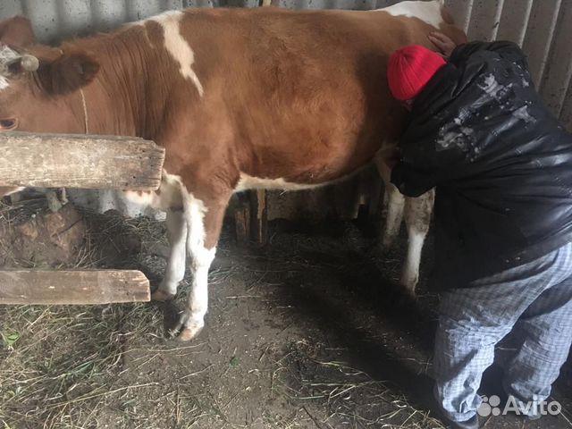 Фото скульптуры коровы в воронеже официальной