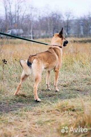 Молодая собака в дар купить на Зозу.ру - фотография № 4