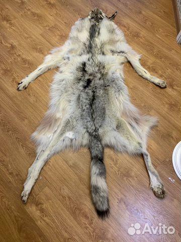 Волк 89004365055 купить 2