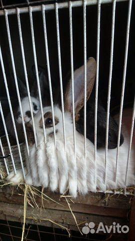 Кролик 89040816416 купить 3