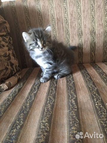 Котята озорнята  89502742399 купить 9