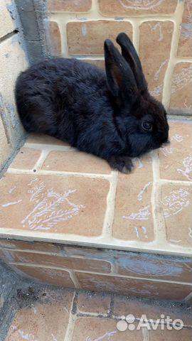 Карликовые кролики  89859349872 купить 1