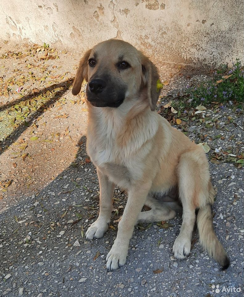 Dog  89112405763 buy 3