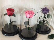 Роза в колбе розового цвета
