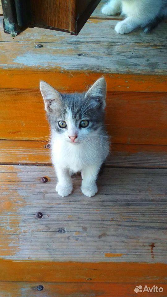 Котята, 5 очаровашек  89173308243 купить 9