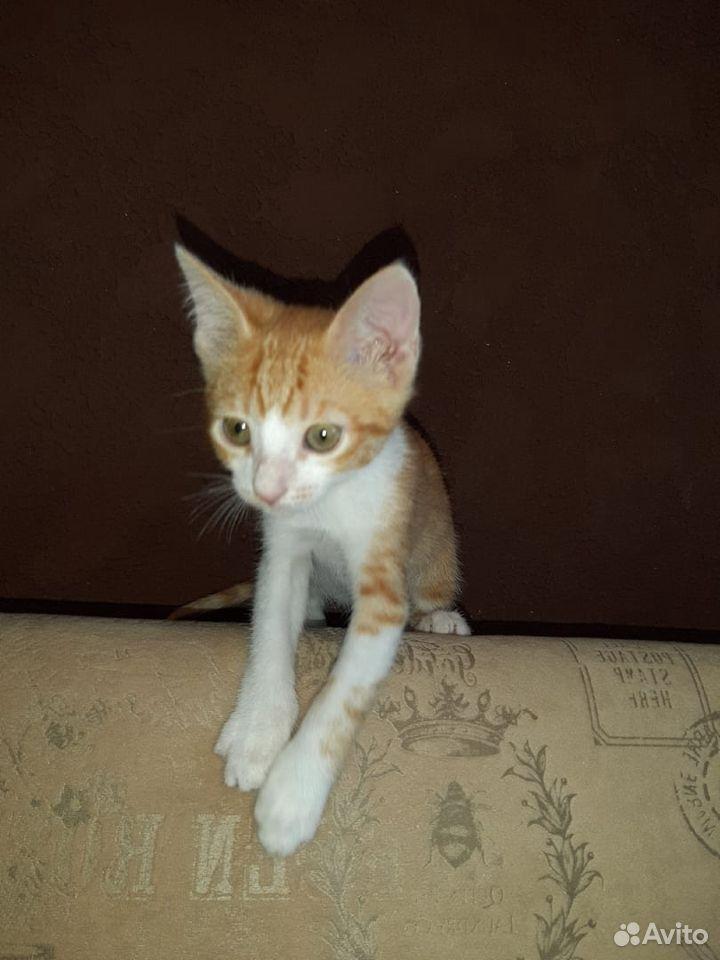 Котенок Рыжа ищет дом