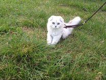 Котик для вязки