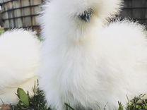 Инкубационное яицо китайской шелковой курицы