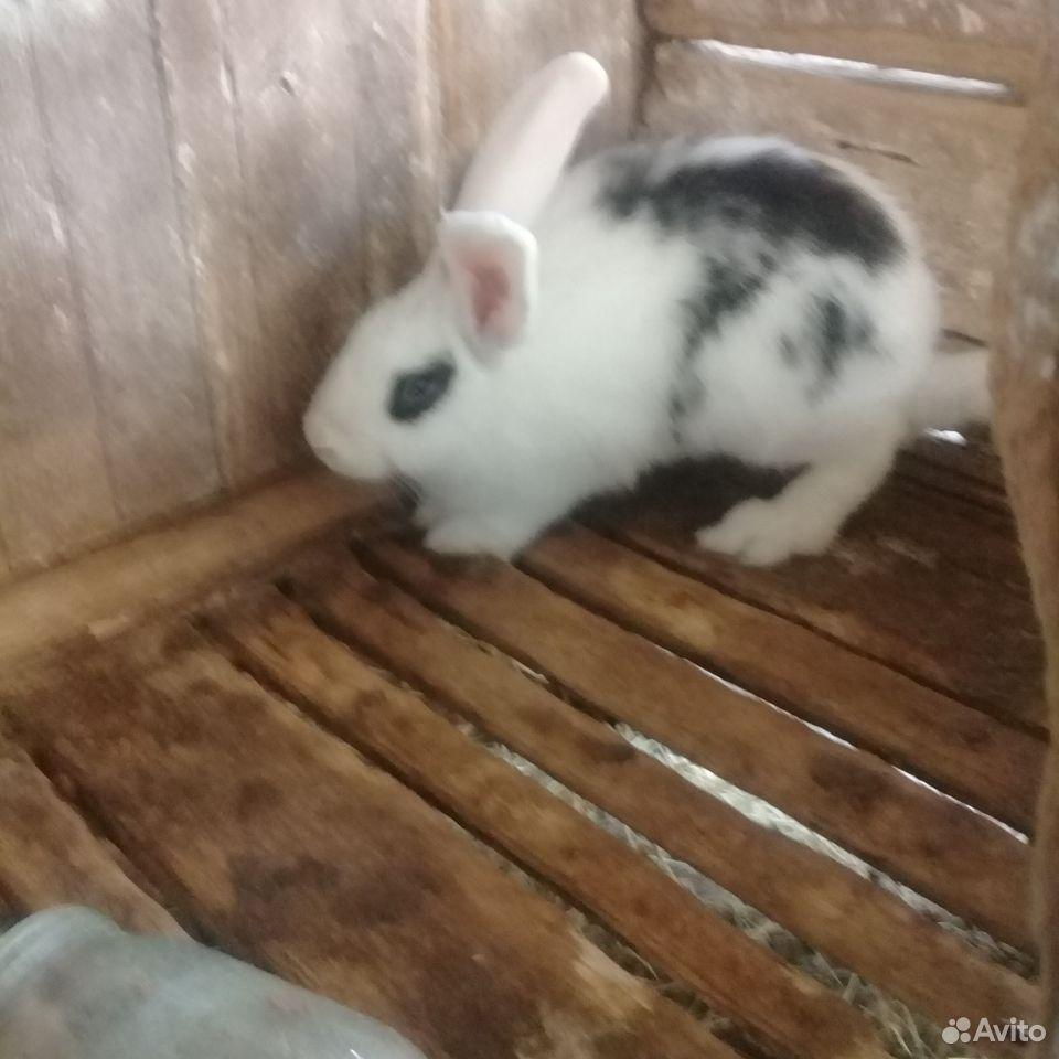 Rabbit  89780050198 buy 7
