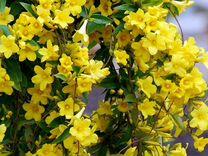 Продам растения с хорошей корневой системой